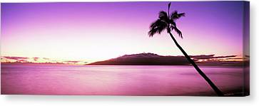 Silhouette Of A Palm Tree, Maui Canvas Print by Panoramic Images