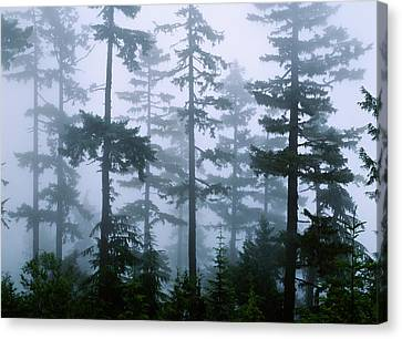 Silhouette Of Trees With Fog Canvas Print by Panoramic Images