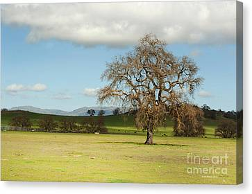 Silicon Valley Hills Canvas Print by Artist and Photographer Laura Wrede