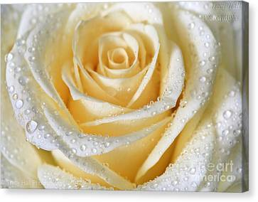 Silk Rose Canvas Print by Tracy  Hall