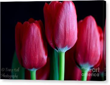 Silky Smooth Tulips Canvas Print by Tracy  Hall