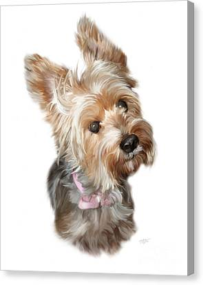 Silky Terrier Canvas Print by Paul Tagliamonte