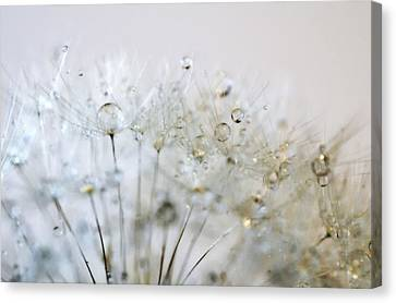 Silver And Gold Canvas Print by Marianna Mills