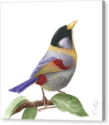 Silver-eared Mesia Canvas Print by Bruce Lennon