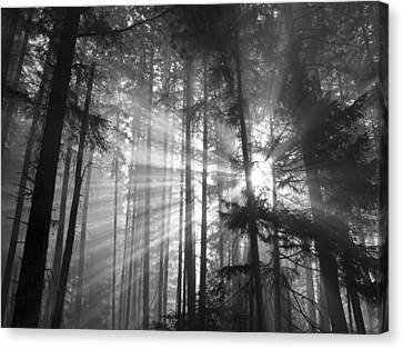 Silver Light Canvas Print by Diane Schuster
