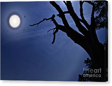 Silvery Moon Canvas Print by David B Kawchak Custom Classic Photography