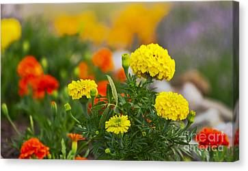 Simple But Beauitful Canvas Print by Timothy J Berndt
