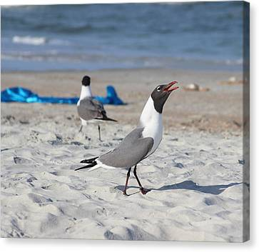 Singing Seagull Canvas Print by Cathy Lindsey