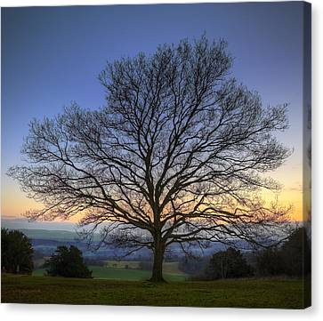 Single Bare Winter Tree Against Vibrant Sunset Canvas Print by Matthew Gibson