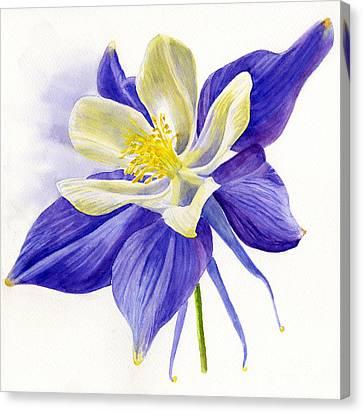 Single Blue Columbine Canvas Print by Sharon Freeman