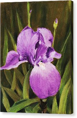 Single Iris Canvas Print by Anastasiya Malakhova