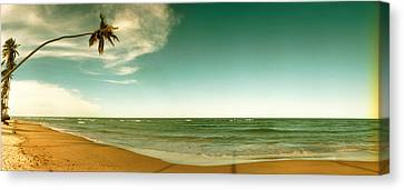 Single Leaning Palm Tree On The Beach Canvas Print by Panoramic Images