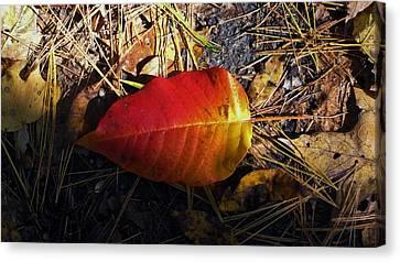 Single Leaf Canvas Print by Michael Saunders