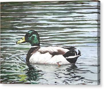 Single Mallard Duck In Water Canvas Print by Martin Davey
