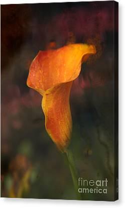 Single Orange Cala Canvas Print by Jennifer Apffel