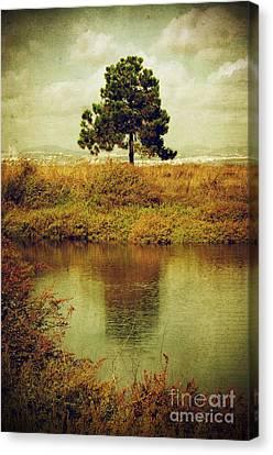 Single Pine Tree Canvas Print by Carlos Caetano