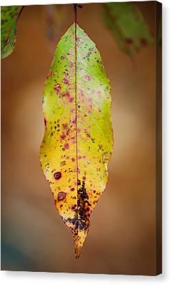 Single Canvas Print by Sarah Coppola