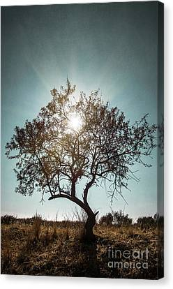 Textures Canvas Print featuring the photograph Single Tree by Carlos Caetano