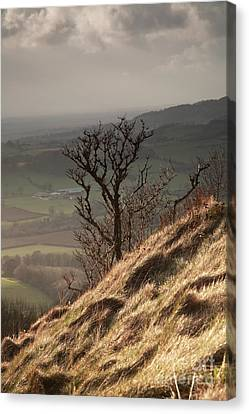Single Tree Sutton Bank Canvas Print by Deborah Benbrook
