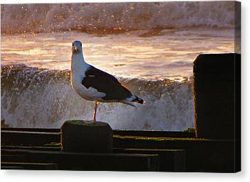 Sittin On The Dock Of The Bay Canvas Print by David Dehner