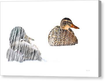 Sitting Ducks In A Blizzard Canvas Print by Bob Orsillo