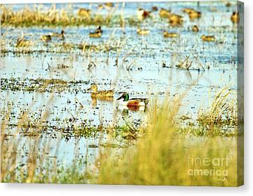 Sitting Ducks Canvas Print by Scott Pellegrin