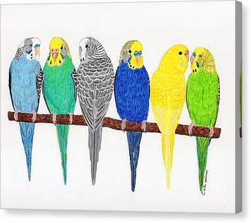 Six Parakeets Canvas Print by Rita Palmer