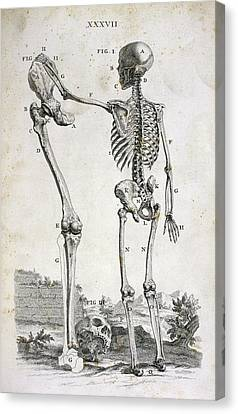 Skeleton And Giant's Leg Canvas Print by British Library