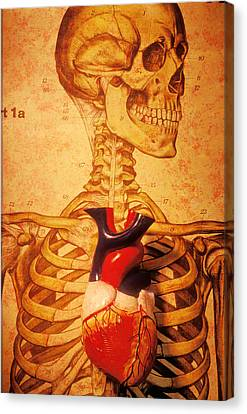 Skeleton And Heart Model Canvas Print by Garry Gay