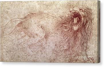 Sketch Of A Roaring Lion Canvas Print by Leonardo Da Vinci