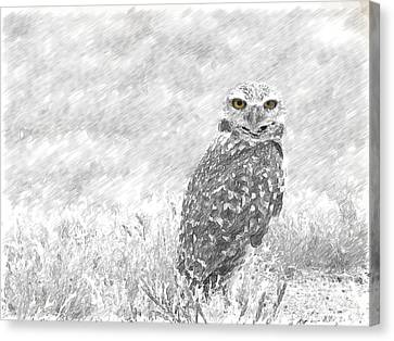 Sketching The Wise Guy Canvas Print by Beverly Guilliams