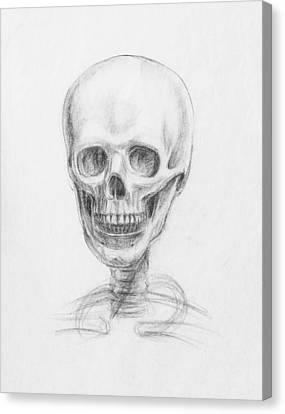 Skull Study Canvas Print by Irina Sztukowski