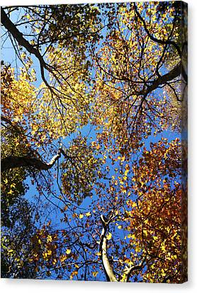 Sky Is The Limit Canvas Print by Lucy D