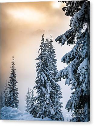 Skyline Lake Forest - January Canvas Print by Inge Johnsson