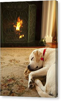Sleepy Puppy Canvas Print by Diane Diederich