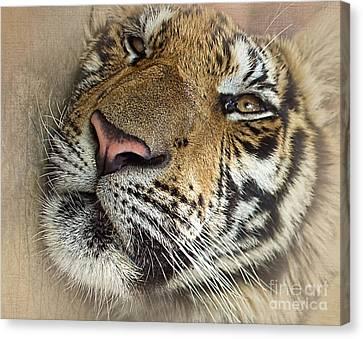 Sleepy Tiger Portrait Canvas Print by Kaye Menner