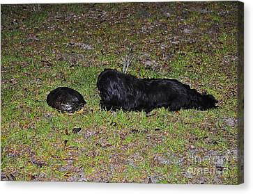 Slider And Shih-tzu Canvas Print by Al Powell Photography USA