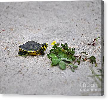 Slider And Sorrel In Sand Canvas Print by Al Powell Photography USA