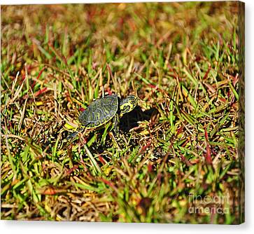 Slider To Go Canvas Print by Al Powell Photography USA