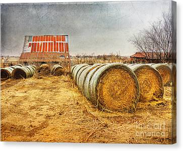 Slumbering In The Countryside Canvas Print by Betty LaRue