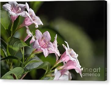 Small Flowers Canvas Print by Joy Watson