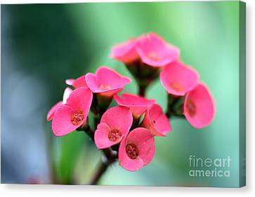Small Red Flower Canvas Print by Henrik Lehnerer