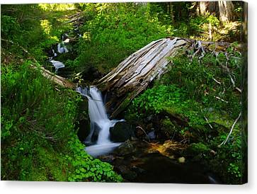Small Water N The Green Canvas Print by Jeff Swan