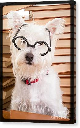 Smart Doggie Canvas Print by Edward Fielding