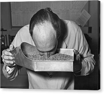Smelling Grain Inspector Canvas Print by Underwood Archives