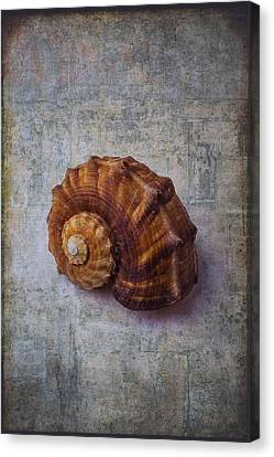 Snail Shell Study Canvas Print by Garry Gay
