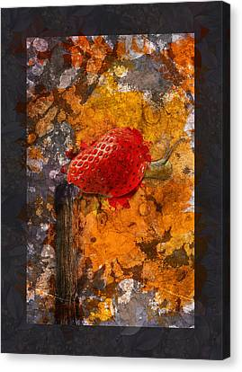 Snail Sory - S20-01bb Canvas Print by Variance Collections
