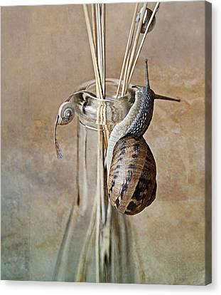 Snails Canvas Print by Nailia Schwarz