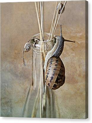 Snails Canvas Print by Nailia Schwarz