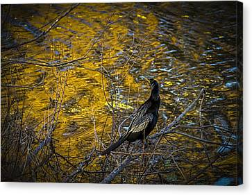 Snake Bird Canvas Print by Marvin Spates